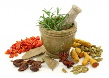 tanaman obat herbal