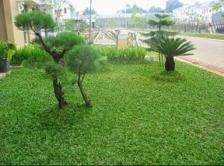 halaman rumah dengan rumput