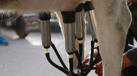 alat perah susu sapi perah