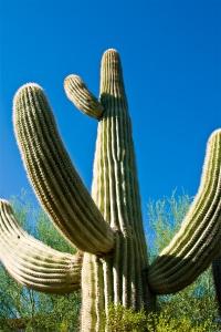 01_Cactus