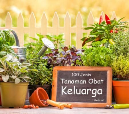 tanaman obat keluarga herbal
