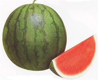 Mengenal berbagai jenis semangka 6