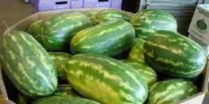 Mengenal berbagai jenis semangka 5