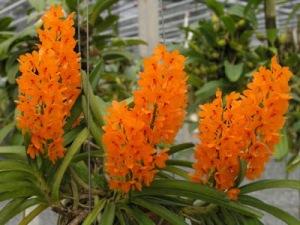 bunga anggrek cantik nan elegan 3