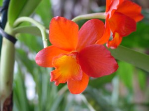 bunga anggrek cantik nan elegan