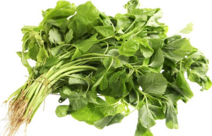 menanam sayuran organik bayam
