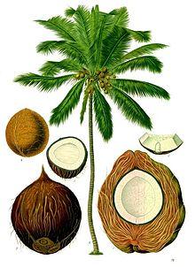 peluang bisnis dari batok kelapa