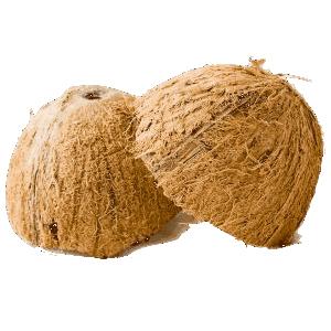 peluang bisnis dari batok kelapa 8
