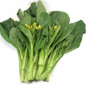 menanam sayuran organik kailan
