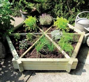 menanam sayuran organik