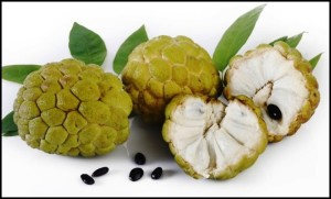 manfaat lengkap buah srikaya