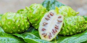 tanaman herbal obat kanker 6