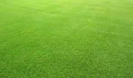 Ini dia Jenis-jenis Rumput, Hijau bagai Karpet