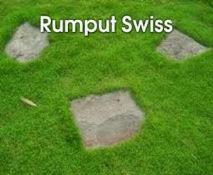 Ini dia Jenis-jenis rumput, Hijau bak Karpet 8