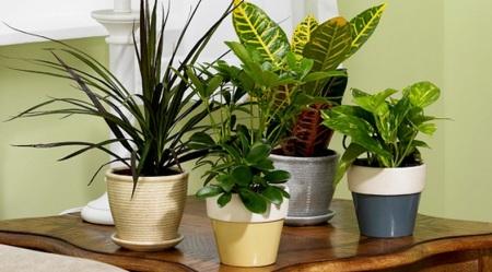 Udara Ruangan Segar dengan Macam-macam Tanaman Hias Indoor 8