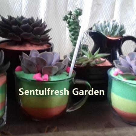 koleksi terrarium mahal
