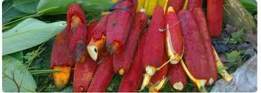 khasiat buah merah