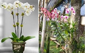 manfaat bunga anggrek untuk kesehatan