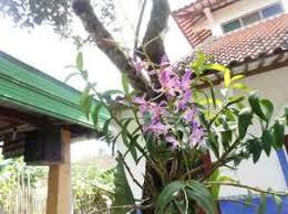 manfaat bunga anggrek bagi tubuh