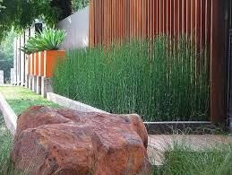 manfaat tanaman bambu air, adem