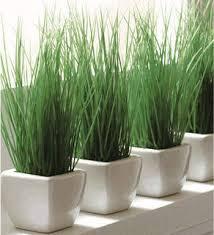 mengnal tanaman bamb air