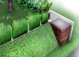 manfaat tanaman bambu air, indah