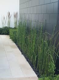 manfaat tanaman bambu air,dua