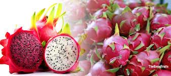 manfaat dan efek samping buah naga