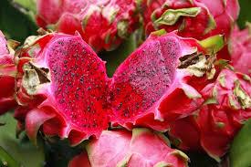 hama penyakit tanaman buah naga