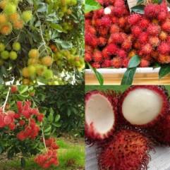 manfaat buah rambutan, manis