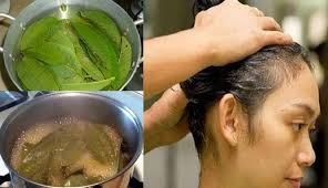 manfaat daun jambu sebagai masker