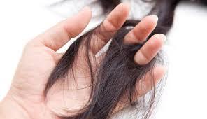 manfaat daun jambu untuk solusi rambut rontok
