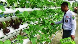 sayur tanaman hidroponik