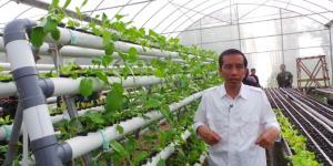 rumah tanaman hidroponik