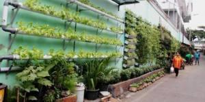 budidaya dengan tanaman hidroponik
