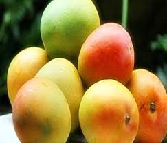 varietas buah mangga
