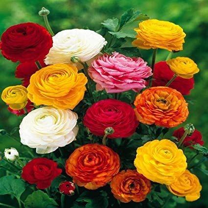 bunga cantik beracun