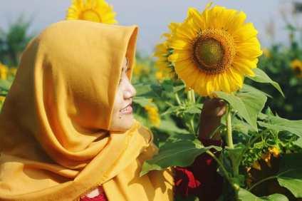 bunga matahari ceria