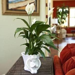 tanaman pot dalam rumah